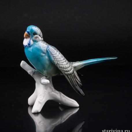 Волнистый попугай, Karl Ens, Германия