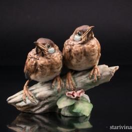 Два птенца дроздов на ветке, Giuseppe Tagliariol (Tay), Италия, сер. 20 в
