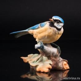 Синица-лазоревка, Giuseppe Tagliariol (Tay), Италия, сер. 20 в