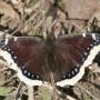 Бабочка на сухой ветке, Goebel, Германия, до 1990 г