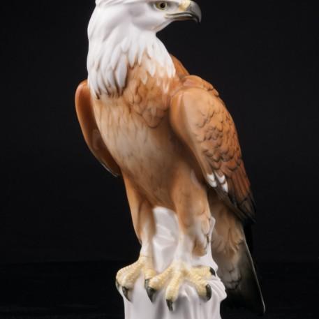 Белоголовый орлан, Karl Ens, Германия, 1920-30 гг