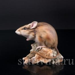 Мышь, Alka Kaiser, Германия