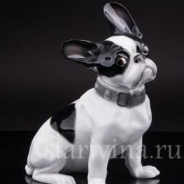 Фигурка собаки из фарфора Французский бульдог, Heubach, Германия, нач. 20 в.
